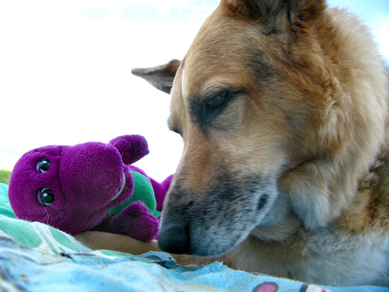 Jerry Loves Barney and Loves You Too