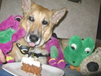 birthday cake for ten year old cancer dog jerry