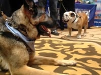 Tillman and Wyatt at BlogPaws