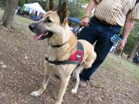Three Legged Wounded Warrior Service Dog Colonel