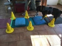 Safe Tripawd Exercise