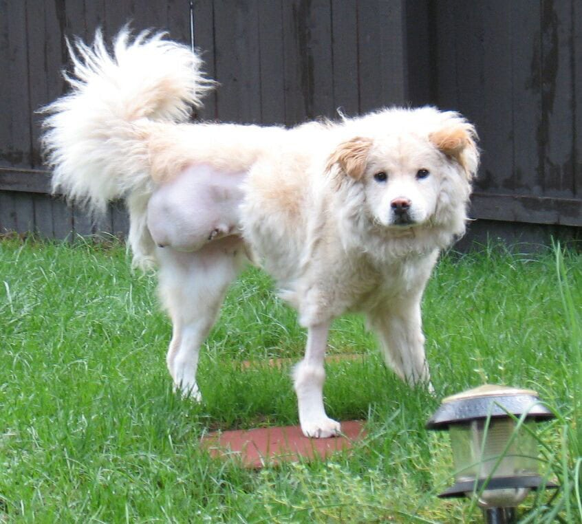 Give Three Legged Rescue Pretty Girl a Forever Home!