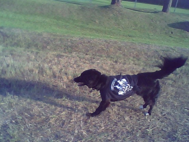 Abbey runs free from canine cancer