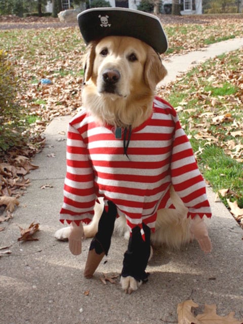 three legged charley dog pirate peg leg costume