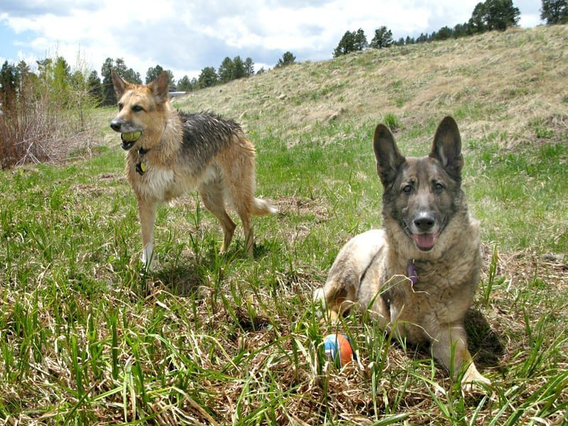 Three Legged Dogs Jerry and Eisen play at Williams Creek Reservoir