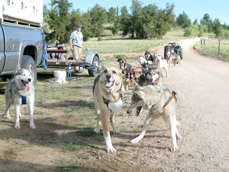 Jerry and Calpurnia Lead the Odaroloc Sled Dogs