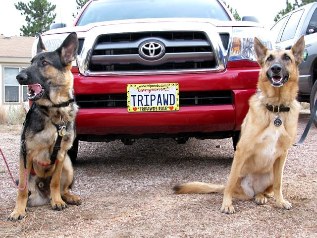 Codie Rae shows Wyatt her cool new Tripawds license plates