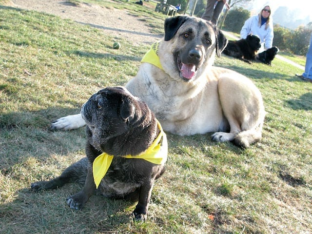 Cemil and Maggie Tripawds Large and Small