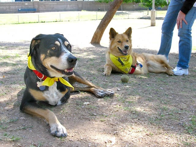 Chuy and Dixie at Arizona Tripawds Party