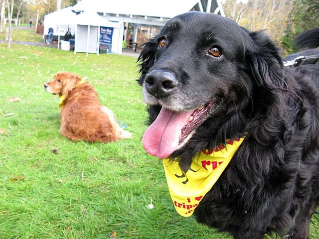 Sammy and Lincoln at 2 Million Dogs Puppy Up Walk