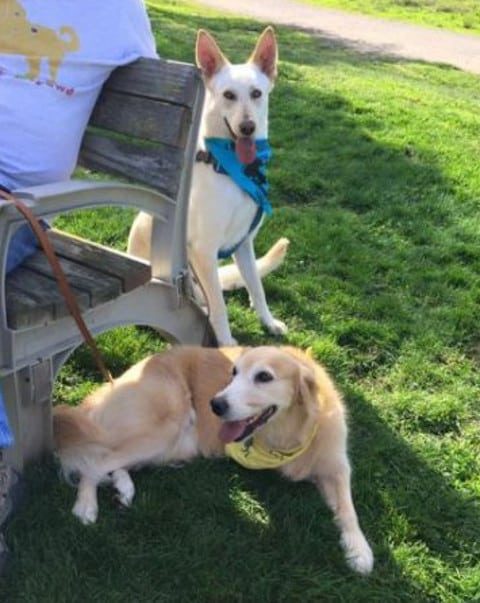 Tripawds Members Dusty and Shelby
