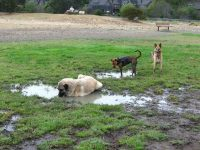 Tripawds Play in Mud