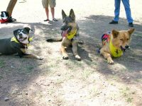 Dixie, Wyatt and Chuy at Mesa Tripawds Party
