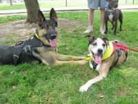 Wyatt and Trouble at Texas Tripawds Party