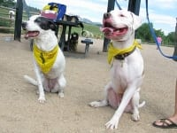 Lily and Cotton at Colorado Tripawds Party