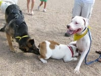 Wyatt and Cotton at Colorado Tripawds Party