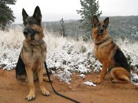 Oaktown Pack Tripawds Wyatt and Austin