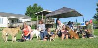 Tripawds at Greyhounds Rock Party