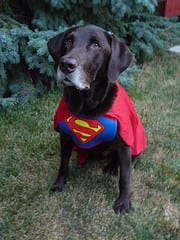 Superdog Hunter